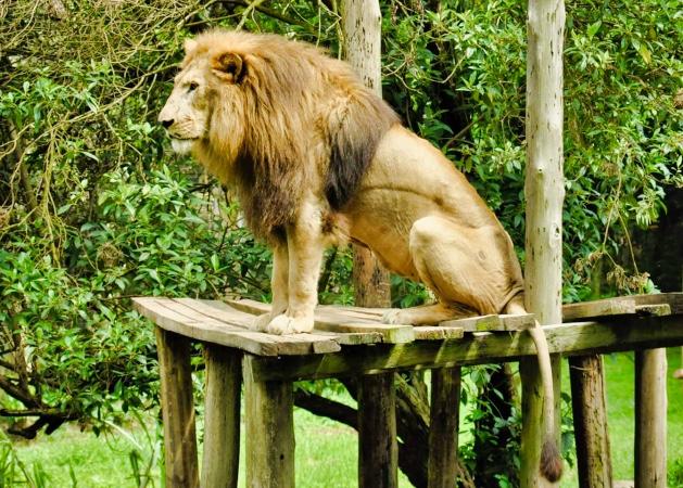 Entebbe Zoo